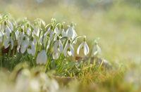 Wiosna w ogrodzie - co jest ważne.