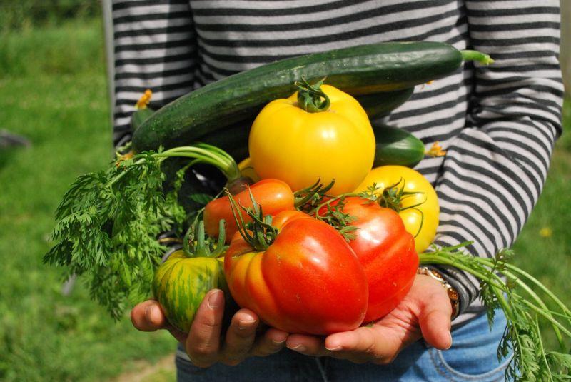 Świeże warzywa z ogrodu
